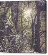 Temperate Rainforest Canopy Canvas Print