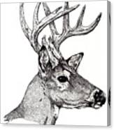 Ten Point Buck Canvas Print