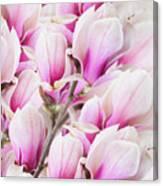 Tender Magnolia Flowers Canvas Print
