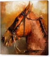 Tennessee Walker In August Canvas Print