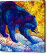 Tentative Step - Black Bear Canvas Print