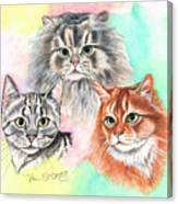 Tentative Trio Canvas Print