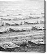 Terezin Cemetery Graves - Czechia Canvas Print