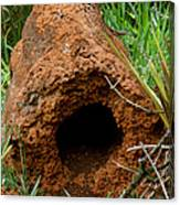 Termite Mound In Brazil Canvas Print