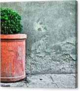 Terracotta Flower Pot On Sidewalk Canvas Print