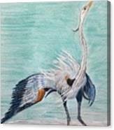 Terri's Heron Canvas Print