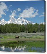 Teton Reflection With Buffalo Canvas Print