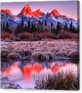 Teton Reflections In The Frosted Willows Canvas Print