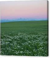 Tetons With Daisies Canvas Print