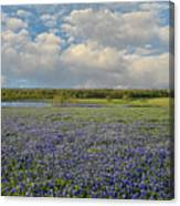 Texas Bluebonnet Bliss Canvas Print