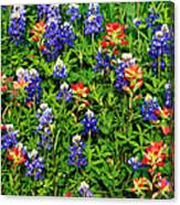 Texas Bluebonnets And Indian Paintbrush Canvas Print