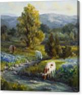 Texas Bluebonnets And Longhorns Canvas Print