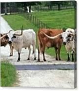 Texas Cattle Guard Canvas Print
