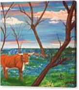 Texas Cow's Blulebonnet Field Canvas Print