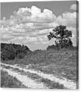 Texas Hill Country Trail Canvas Print