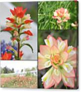 Texas Indian Paintbrush Collage Canvas Print