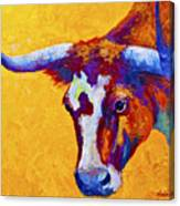 Texas Longhorn Cow Study Canvas Print