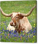 Texas Longhorn In Bluebonnets Canvas Print