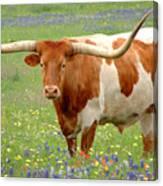 Texas Longhorn Standing In Bluebonnets Canvas Print