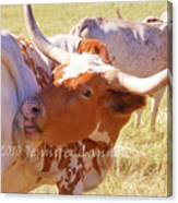 Texas Longhorns Canvas Print