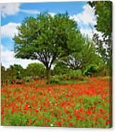 Texas Poppy Field 159 Canvas Print