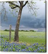 Texas Spring Storm Canvas Print