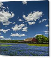 Texas Springtime Canvas Print