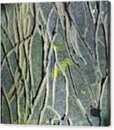Texture Study One   Entanglement Canvas Print