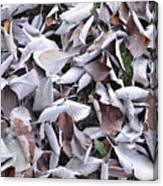 Texture103 Canvas Print