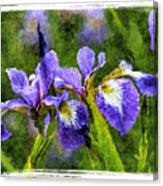 Textured Bearded Irises Canvas Print