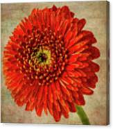 Textured Red Daisy Canvas Print