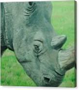 Textured Rhino Canvas Print