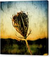 Textured Seedhead. Canvas Print