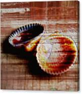 Textured Shells Canvas Print