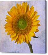 Textured Sunflower Canvas Print