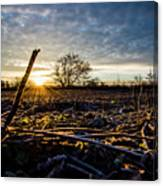 Thanksgiving Sunrise Canvas Print