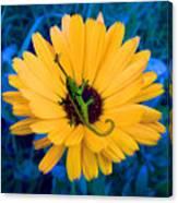 Imaginary Flower Canvas Print