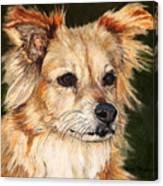 The Adventurous Dog Canvas Print