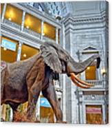 The African Bush Elephant In The Rotunda Of The National Museum Of Natural History Canvas Print