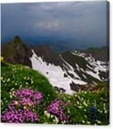 The Alps Wildflowers Canvas Print
