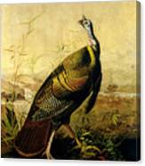 The American Wild Turkey Cock Canvas Print