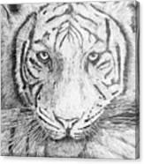 The Amur Tiger Canvas Print