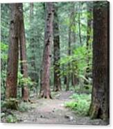 The Ancient Hemlock Forest Canvas Print