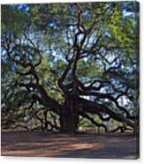 The Angel Oak In Spring Canvas Print