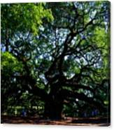 The Angel Oak In Summer Canvas Print