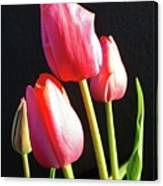 The Appearance Of Spring - Tulips Canvas Print