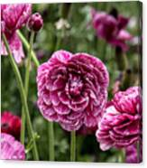 The Art Of Flowers Canvas Print