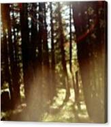 The Art Of The Forest Canvas Print