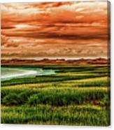 The Atlantic White Cedar Swamp Trail Canvas Print