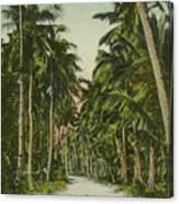 The Avenue Of Palms Guam Li Canvas Print